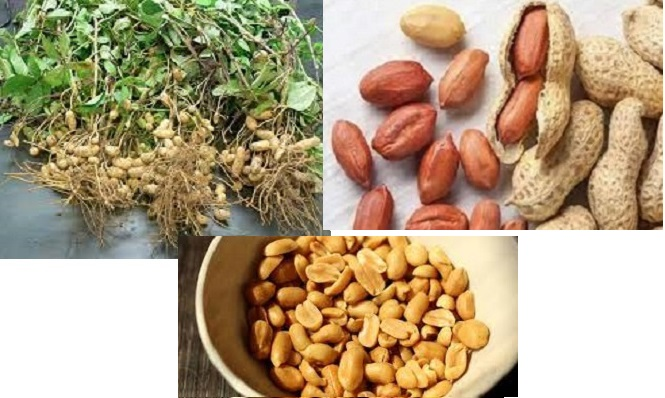 Sudan Has Potential Of Exporting Worth Of $6 Billion In Groundnuts, Study