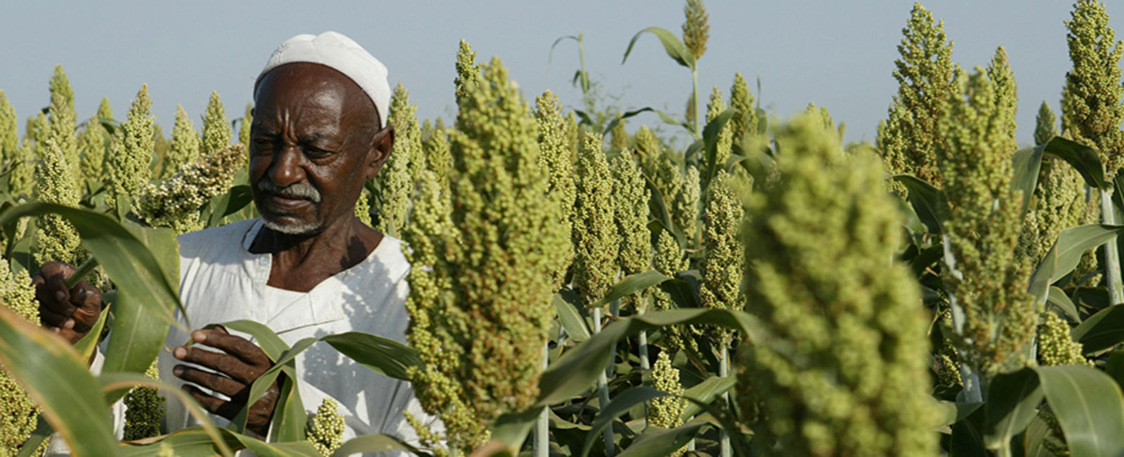 How Fares The Sudan's  2019-2020 Agricultural Season?