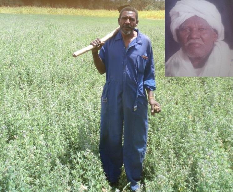 In An Unusual Turn, Farmer Successfully Grows Wheat In Summer