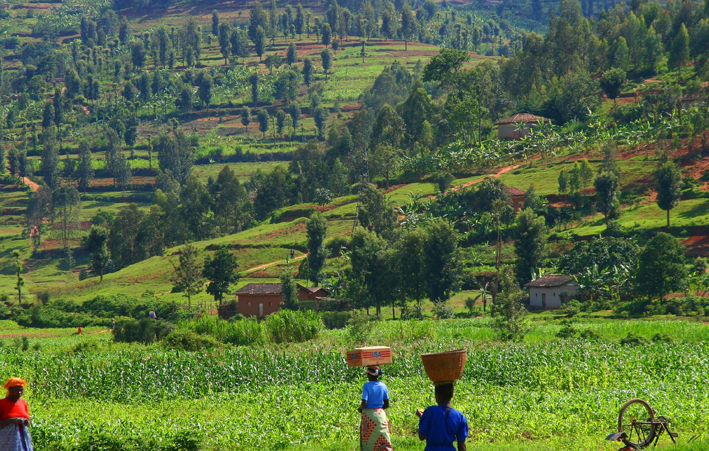 Rwanda's Development Model: Could It Work For Sudan?