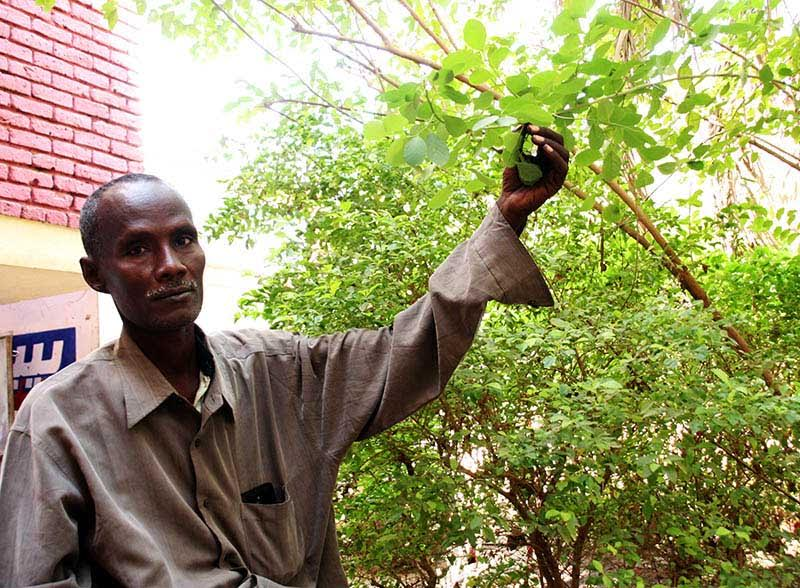 Scholars Bow to Wisdom of Traditional Herbs Specialist