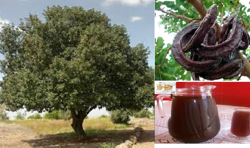 The Many Uses Of Sudanese Carob