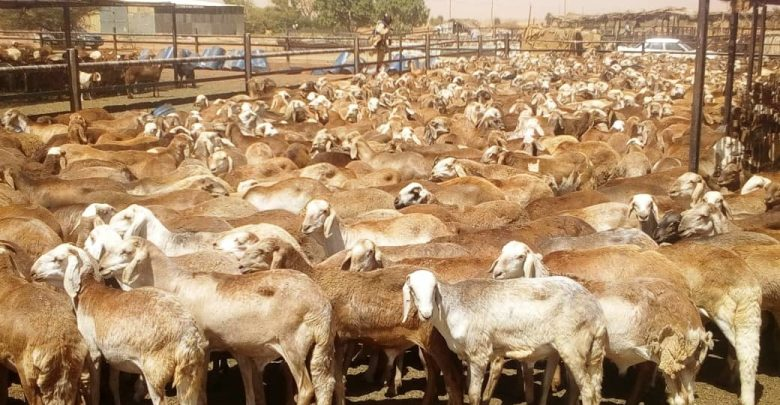 A Lot More Need Be Done To Get Maximum Benefit From Sudan's Vast Livestock