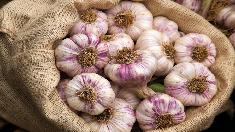 Garlic: Attempts To Re-indigenize Long Neglected Crop