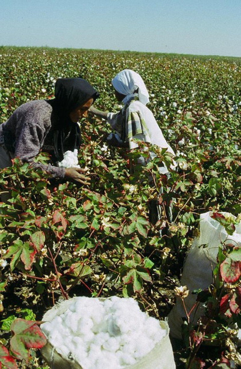Sudan Looks Forward To Regaining Cotton Status