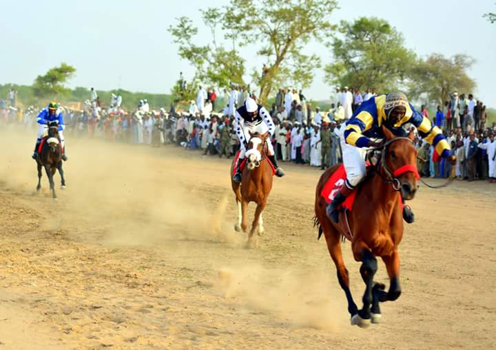 Horses In Sudan