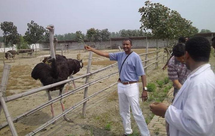 Ostrich Farming: The Unknown Treasure
