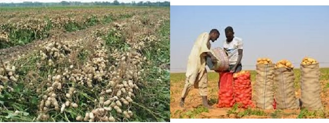 Two Projects Promoting Potato Production To Be Implemented