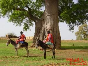 Tabaldi tree